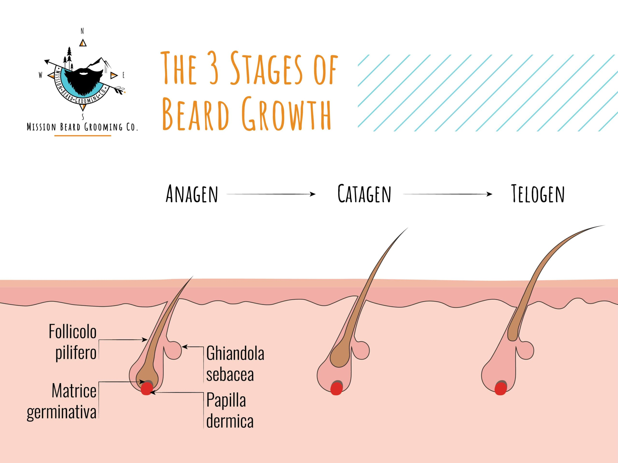 How Long Does it Take to Grow a Beard? - Mission Beard